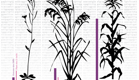 Plant genome comparison