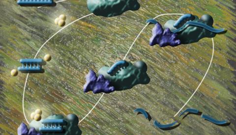 siRNA pathway